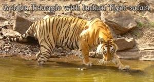 tiger-09-12